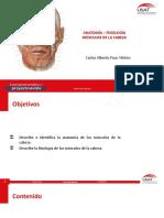 anatomia y fisiologia semana 4.pdf