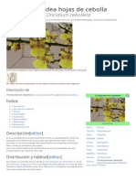 oncidium-cebolleta.pdf