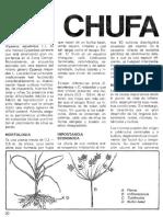 Cyperus Esculentus Para Trabajo de Investigacion