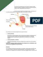 Biología - s. Digestivo