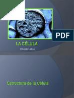 3 Celula-membrana Nucleo