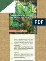 Remedios naturales para la salud de tu huerto - Canarias - agricultura ecologica - permacultura - plaga - huerta - jardin