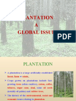 Why We Go for Plantation