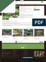 Bonsai Pin Neted - GardenExpert.ro