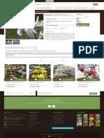 Magnolia Kewensis Wada's Memory - GardenExpert.ro