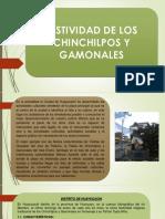 CHINCHILPOS.pptx
