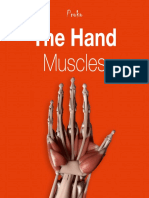 24p the Hand Muscles eBook 1