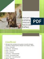 Monyet Ekor Panjang ( Ppt )