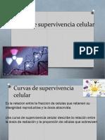 Curvas de Supervivencia Celular