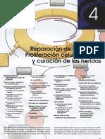 Capitulo 04. Reparación de Los Tejidos Proliferación Celular, Fibrosis y Curación de Las Heridas.