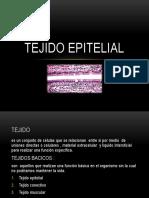 Tejido Epitelial y Glandula