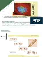 Ap5- Diferenciação celular