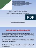 Final Endocrinología, Hipotálamo, Hipófisis, Gonada