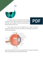 Anatomi dan Fisiologi Mata.docx