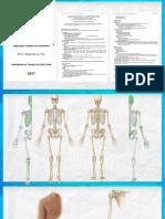 ¿Como estudiar Huesos_ (Osteología).pptx