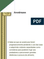AVESTRUZES, 2006