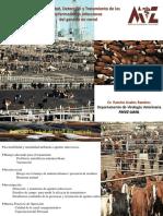 3_Bioseg_tratamiento_feedlots_2013.pdf
