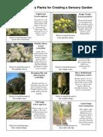 Plants-for-Sensory-Garden