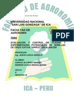 PLAGAS-DEL-ARROZ.docx