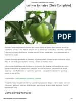 Como plantar e cultivar tomates [Guia Completo]