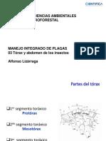 Clase 03 (torax_y_abdomen_de_insectos).pdf