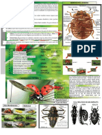 COLEOPTERA COCCINELIDAE.pdf