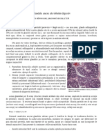 Glandele anexe ale tubului digestiv