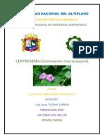 centrosema.docx