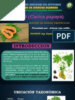 papaya.pptx