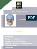 1.-Fosas nasales