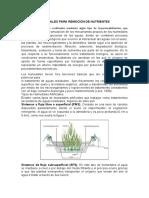 TRABAJO 3 Humedales para remoción de nutrientes.pdf