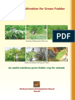 moringa-oleifera for cattle feed