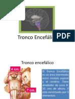5-Tronco encefálico resumen