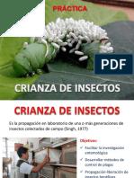 PRACTICSA  CRIANZA DE INSECTOS (2)