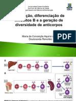 Maturação linfócitos B.pdf