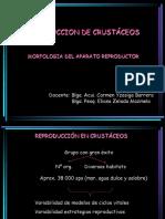 9da_reproduccion_de_crustaceos.ppt