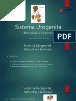 slide sistema-urogenital