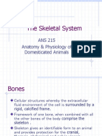 SkeletalSystemVII (1).ppt