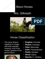 All About Horses.ppt