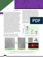 Carbon Nanobuds.pdf