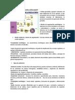Resumen Anatomia Vegetal