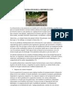 EFECTOS NEGATIVOS DE LA REFORESTACION.docx