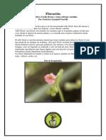 Ficha de Tallo floral