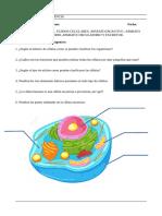 Tema 9 LA CÉLULA, TEJIDOS CELULARES, APARATO DIGESTIVO,APARATO RESPIRATORIO, APARATO CIRCULATORIO Y EXCRETOR