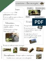 les escargots doc et ex.pdf