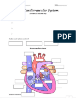 The Cardiovascular System_worksheet