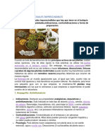 15 Plantas Medicinales Imprescindibles