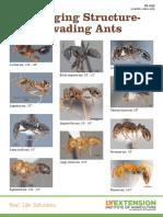 Invading Ants