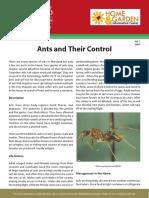 HG7_Ants