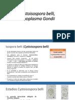 Isospora, Balantidium, Toxoplasma